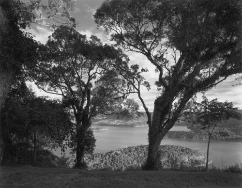 Valdir Cruz, Paisagem com arvores e lago, 2002,  Pigment on paper, 30 x 38 inches.