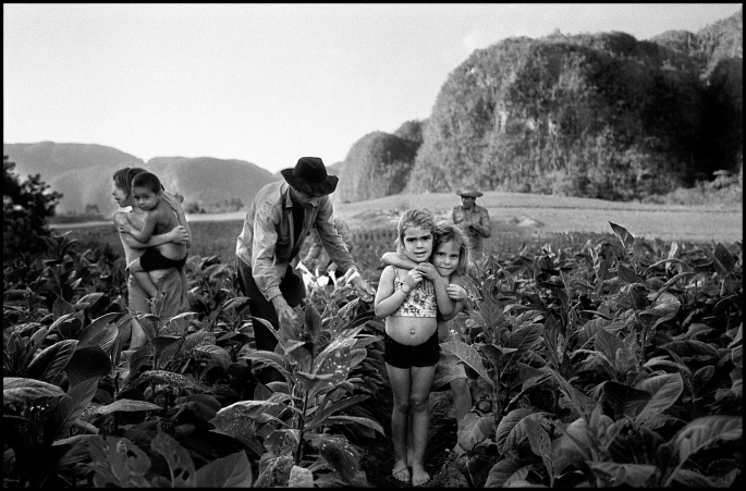 "Tobacco Harvesting, Viñales, Cuba, 2002 Silver halide print, 7.5 x 11""  Limited edition of 10 Price: $300 (market value of Manuel's work: $700)"